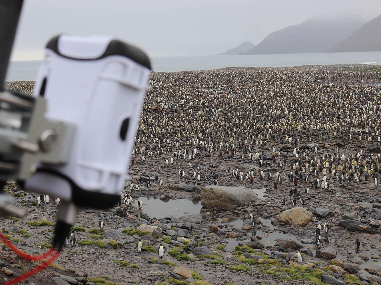antarctica-apmp-2