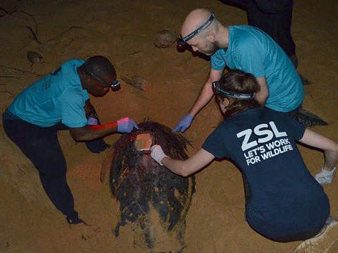 sea-turtle-tagging