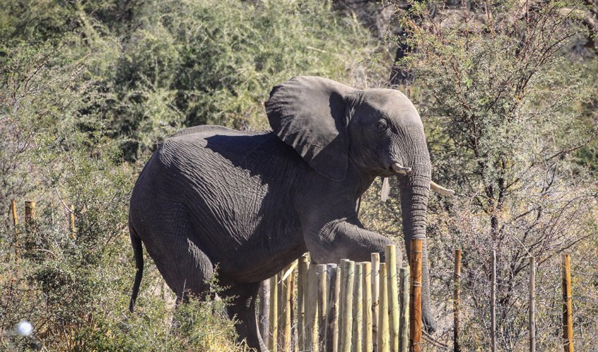 Elephants-detection-with-Machine-Learning